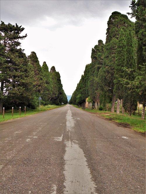 italy  tuscany  cypress