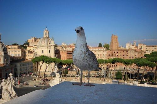 italy  rome  monuments