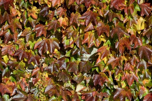 wine partner autumn colours autumn