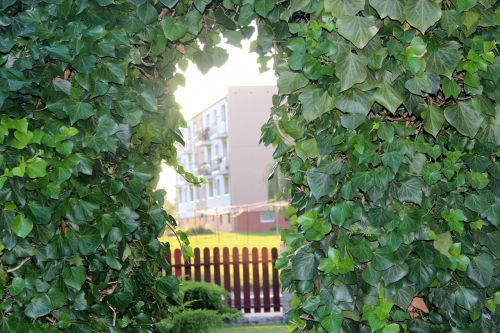 ivy nature view