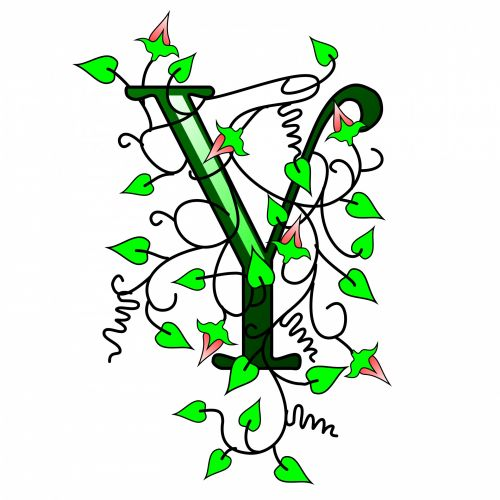 Ivy Capital Letter Y