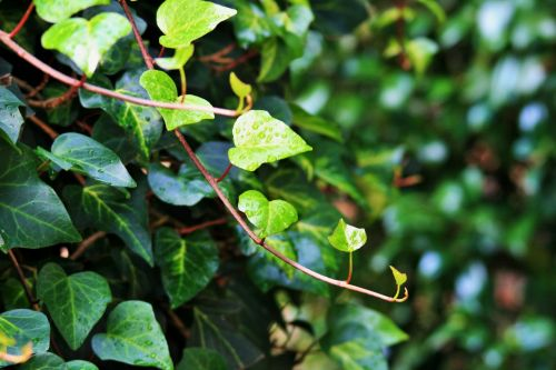 Ivy Runner With Raindrops