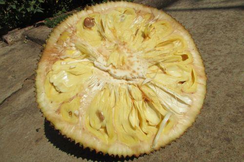 jack fruit fruit exotic