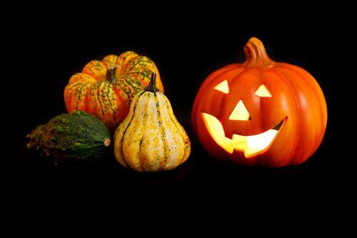 Jack O Lantern Pumpkins