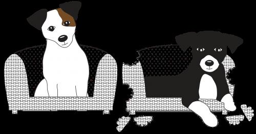 jack russell dog jack