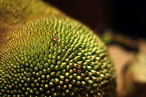 jackfruit tropical fruit fruit