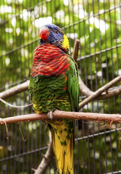 florida zoo parrot