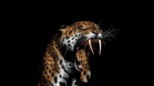 jaguar animal wild