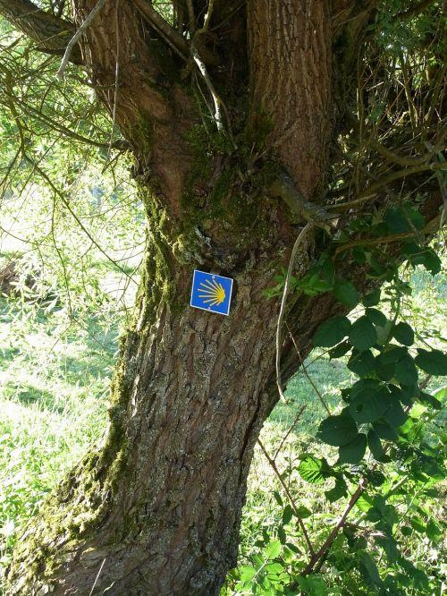 jakobsweg shell tree