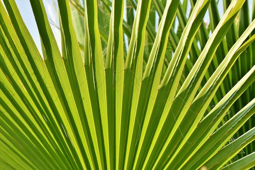 james  palm  leaf
