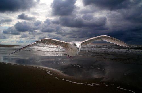 janvangent beach peaceful