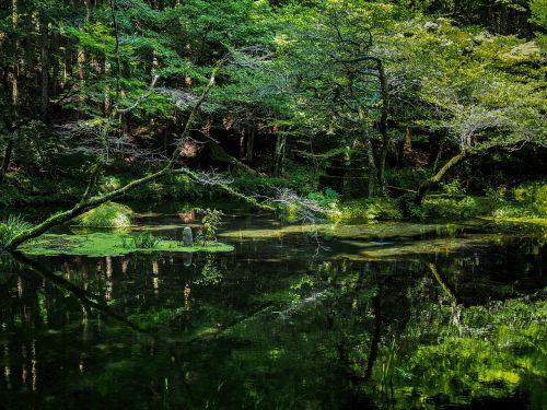 Japonija,vandens šaltiniai,ubuyama kumamoto,ryškus vanduo,upė,mineralinis vanduo,vanduo,slėnis,Therivers