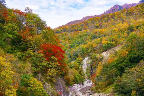 japan autumnal leaves akiyama township