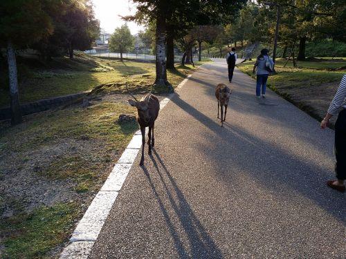 japan nara park