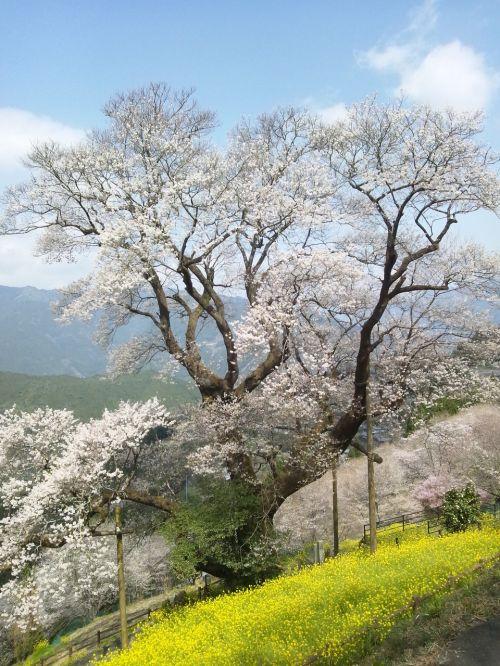 japan kochi prefecture niyodogawa town