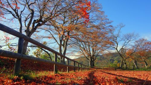 japan autumn autumnal leaves