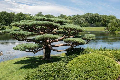 japanese garden chicago botanic garden garden