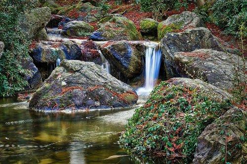 japanese garden  bonn  waters