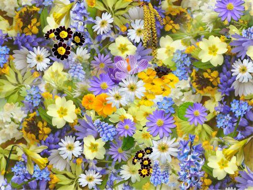 gražus, gėlės, laukiniai, laukai, dažymas, pavasaris, vasara, žydėti, sodas, kosmosas, mėlynės, žydėjimas, augalai, koliažas, Daisy, Šalis, Jardin gėlės, žydėjimas
