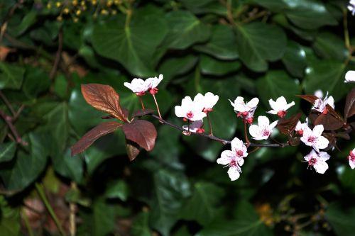 jaro florets nature