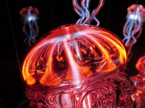 jellyfish luminous jellyfish light