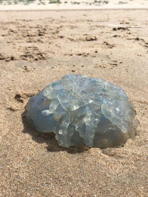 jellyfish beach sun