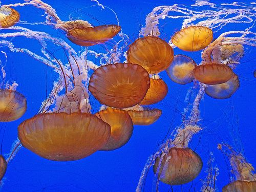 jellyfish sealife animals
