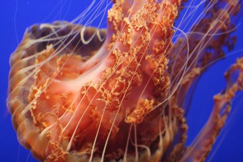 jellyfish tentacles sea