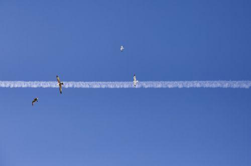 jet streak birds sky