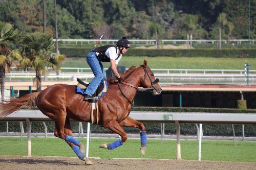 jockey jockey on horse breezing