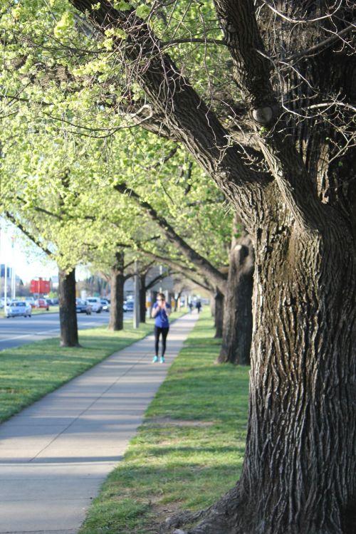 jogging tree footpath