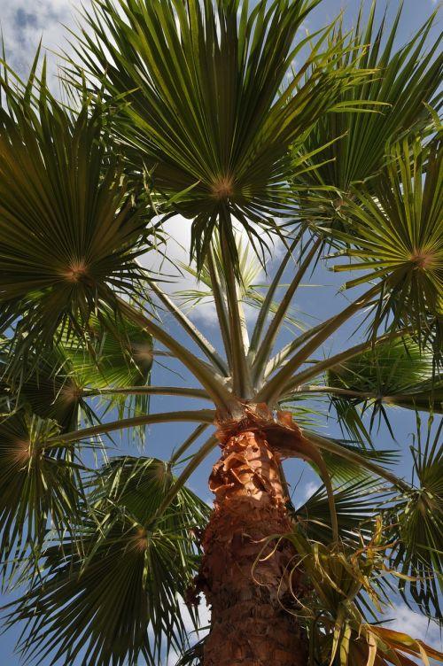 jordan summer palm