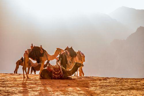jordan wade rooms camel