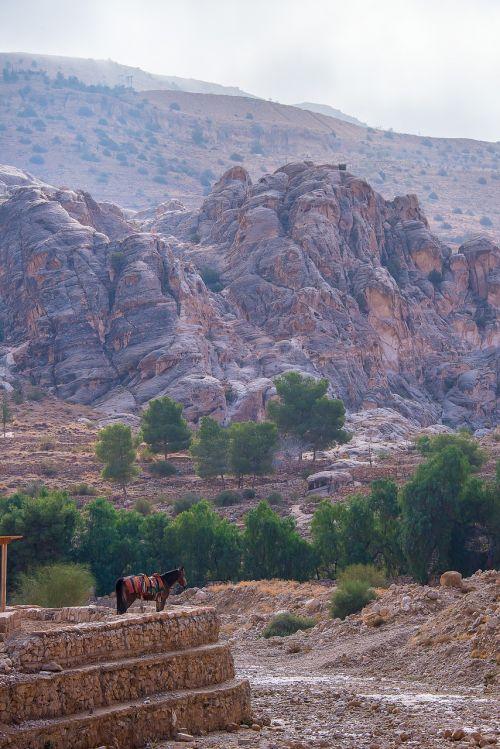 jordan petra horse