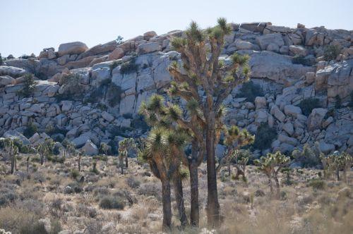 Joshua Tree National Monument