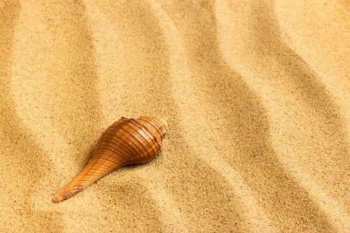 journey sand shell