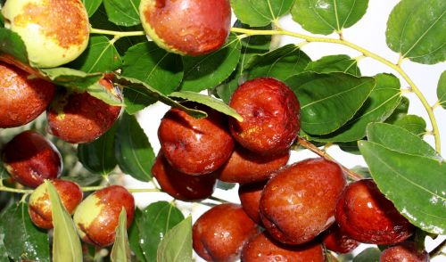 jujube food green dates