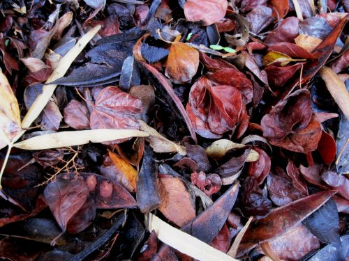 Jumble Of Leaves And Pods