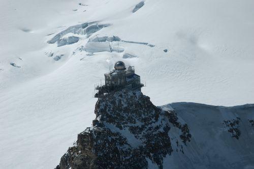 jungfraujoch shinx alpine