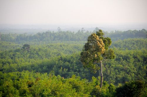 jungle myanmar forest