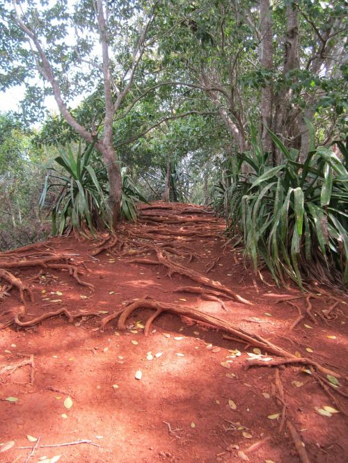 jungle earth tones red clay
