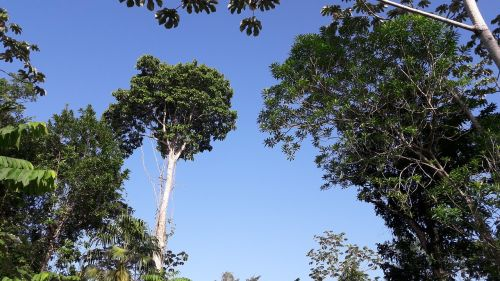 džiunglės,medis,bagažinė