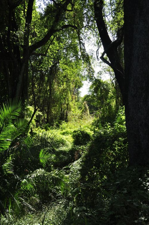 jungle nature forest