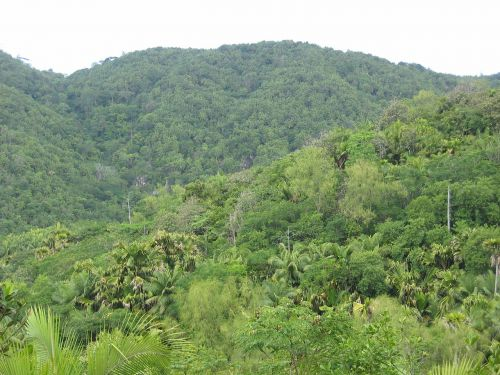 jungle forest tropical