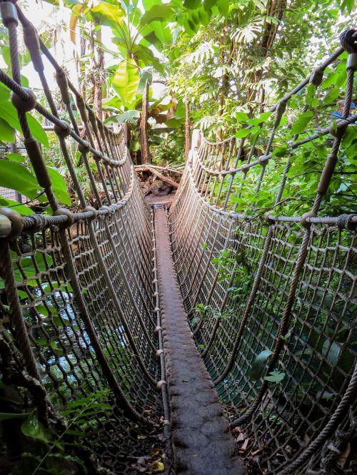 jungle suspension bridge abyss