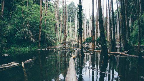 jungle everglades swamp