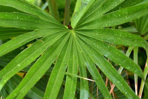 jungle drum leaves radial rain drops