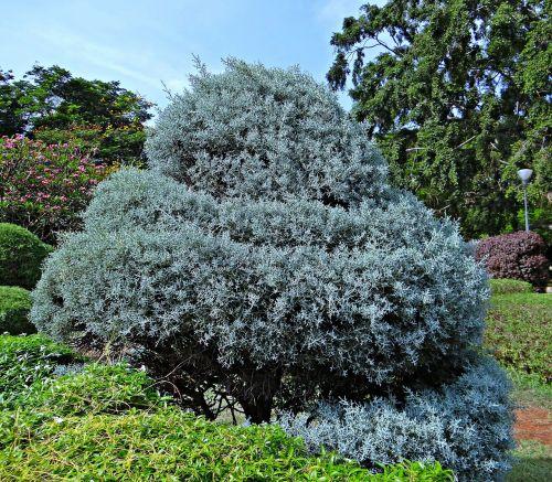 juniper botanical garden trees