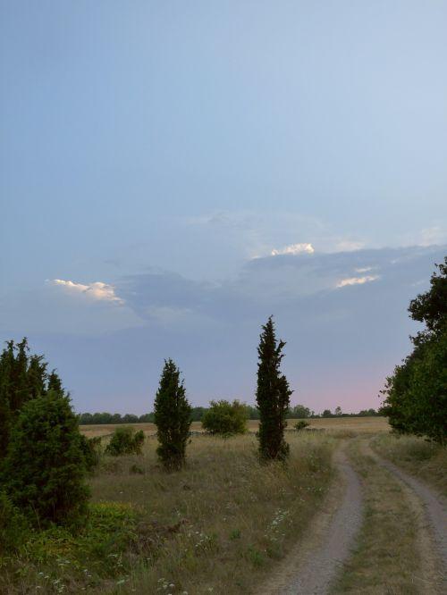 juniper gravel road sunset