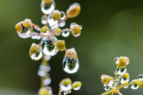 just add water flower macro